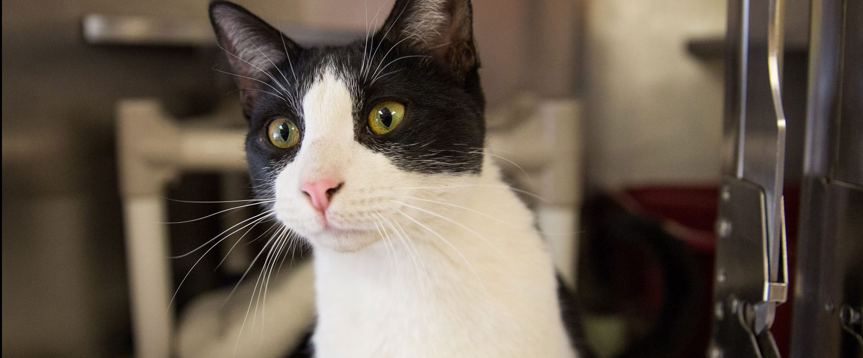cat looking hopeful