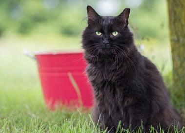 Community cat Sully