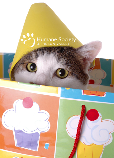 cat in a gift bag with a birthday hat