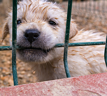puppy chewing on the bar of a cage