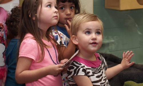 Amused toddlers at HSHV during Little Paws Storytime