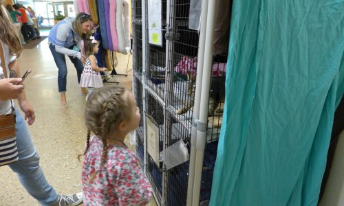 Girl looking at kitten during Little Paws Storytime at HSHV