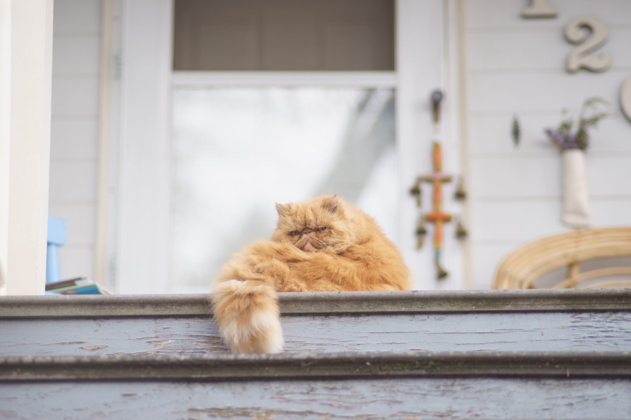 How To Transition Your Cat To An Indoor Outdoor Lifestyle Hshv
