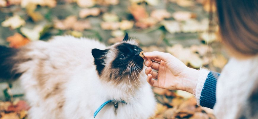 Training Cats with Positive Reinforcement