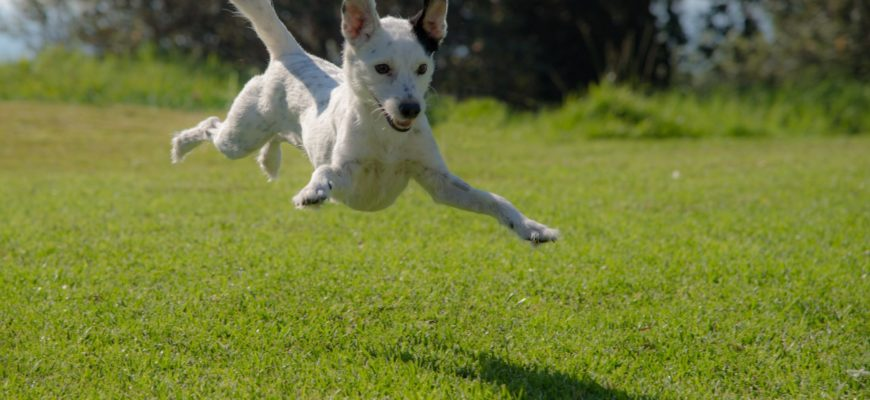 Keeping your High Energy Dog Happy & Healthy