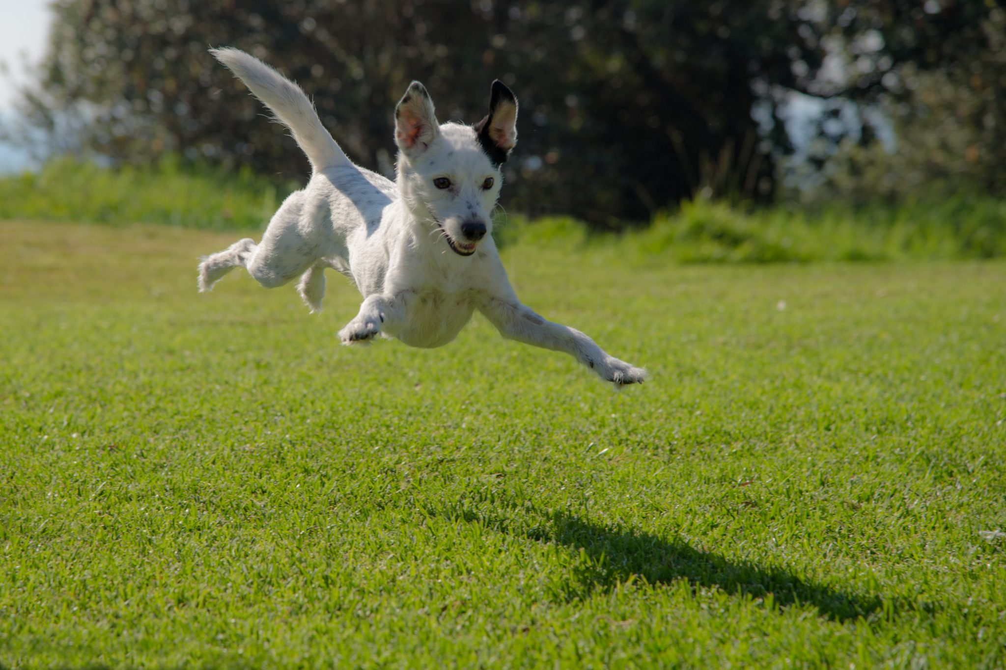 Keeping Your High Energy Dog Hy Healthy