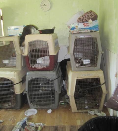 Cat and dog kennels stacked on top of one another in fillth