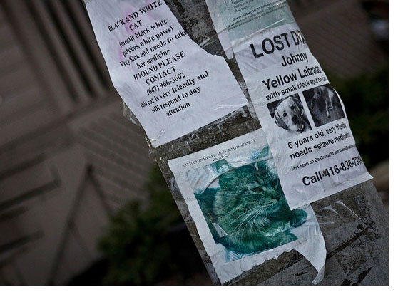 Lost dog and cat sign