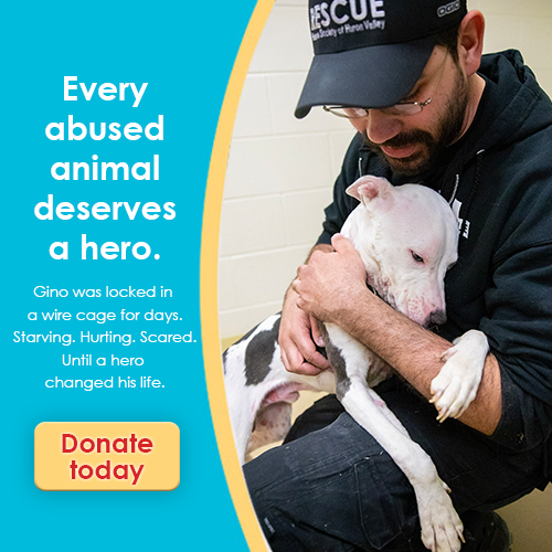 Donate today to give abused animals lifesaving emergency rescue