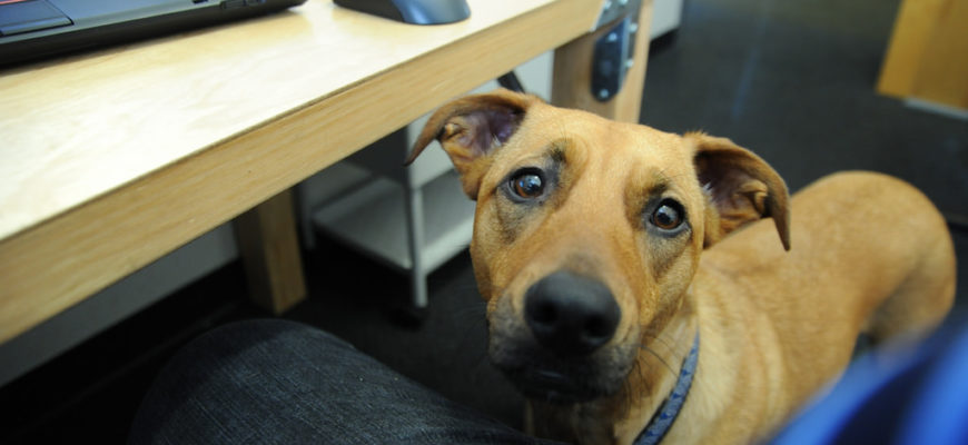 Returning to work? How to prepare your dog