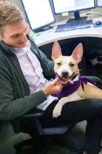 Workplace wellness - doggie date