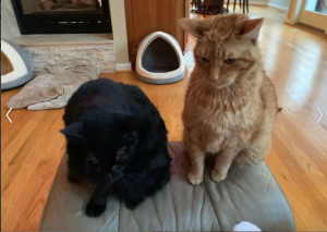 Need New Home For Two Sweet, Loving Cats