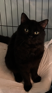 Charming Charlie needs your help!