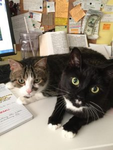 Affectionate Cats Are Looking for Humans of Caliber