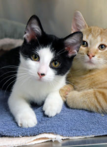 4 things everyone should consider before adopting a second (or third...) cat