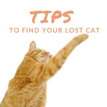 TipsLostCat