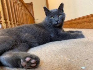 Nimbus found after four months missing