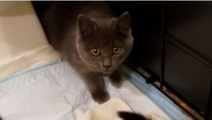 PULA the Petite Feline