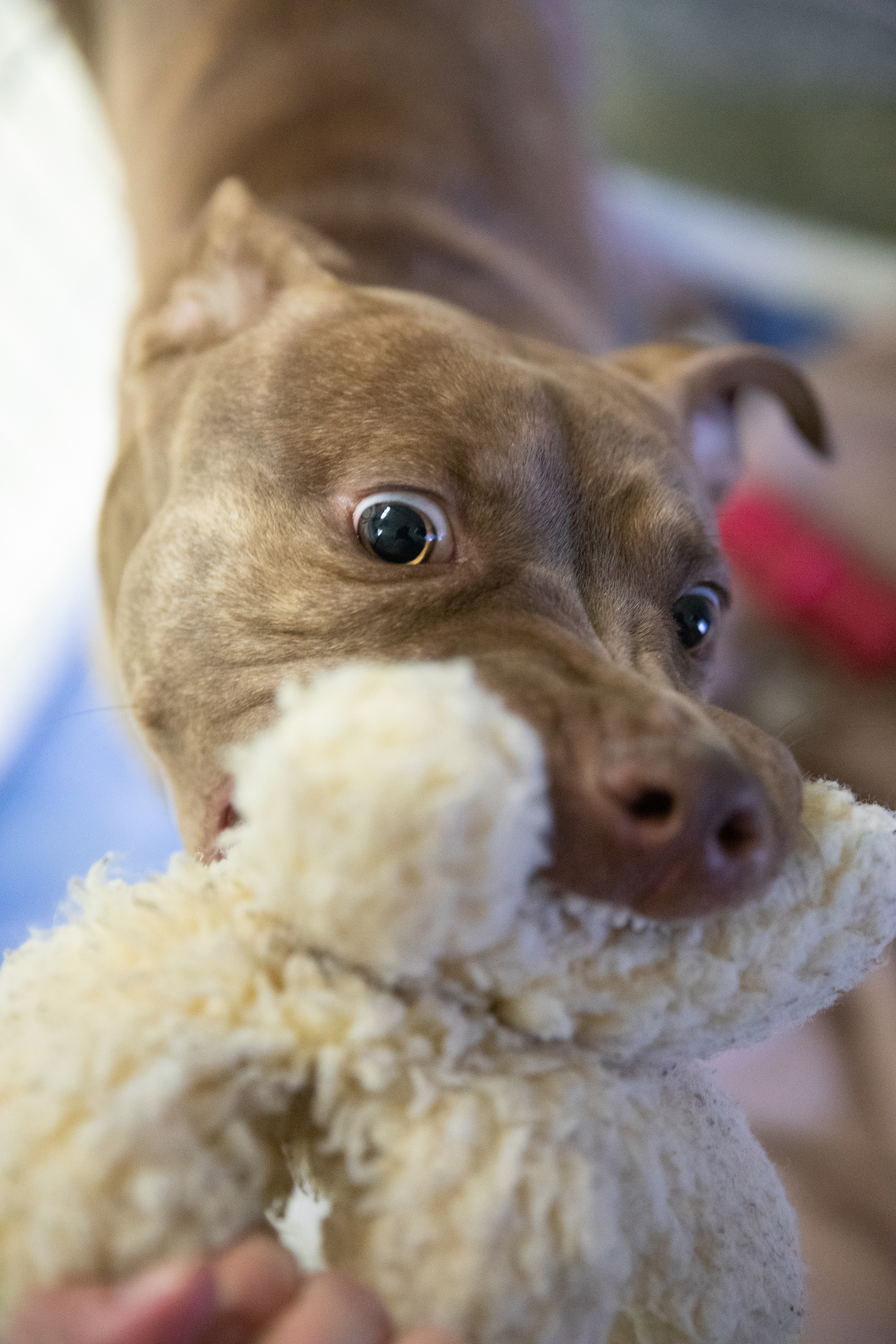 How to keep kids' toys from becoming dog chews