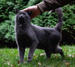 Old Grey - Sweet Little Kitty