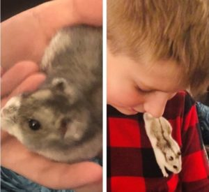 Adorable Dwarf Hamsters Looking for a Home
