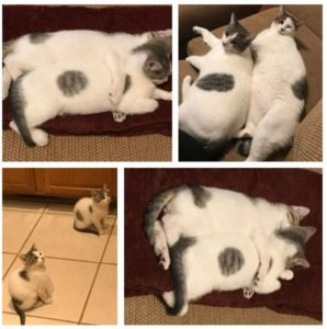 Two beautiful kitties need a new home!