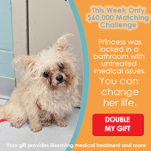 This week only your donation is doubled