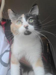 Beautiful Girl Cat