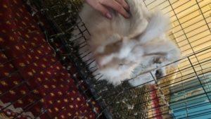 Snuggle Puddle