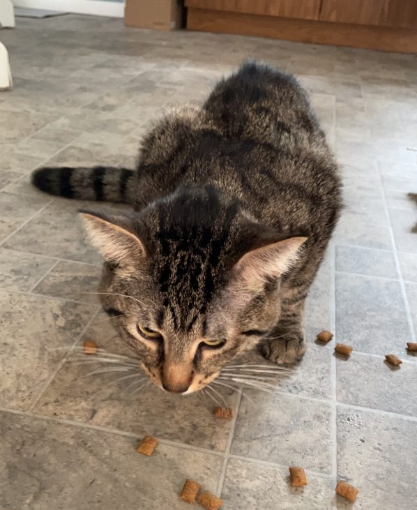 Sweet, Loving Cat Needs a Home