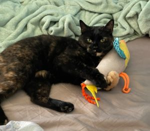 Shaqueque, Loving Cat