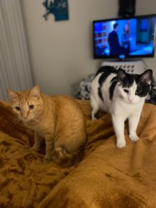 Two of the sweetest kitties are looking for a new home.