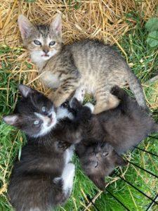 Kittens Need Loving Homes