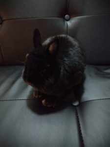 Choosy but cuddly bunny needs new loving forever home.