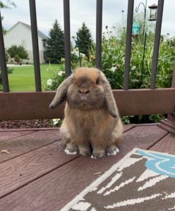 Young Rabbit Needs a New Home