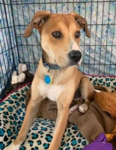 Puppy is looking for loving and patient forever home.