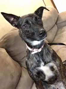 NikKee's Looking for a Active Home