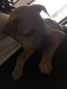 Puppy Needs Affection and Family