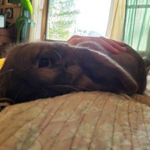 Sweet Pet Rabbit