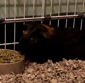 Piggy Jack Needs a New Home