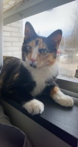 Young Vivacious Calico Looking for Love