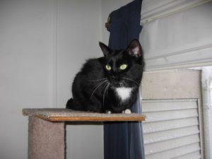 Affectionate Indoor/Outdoor Cat