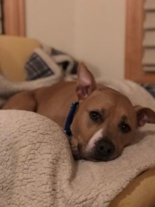 Sweet, Cuddly Dog in Search of Family