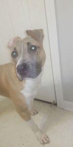 Loving dog needs new home!