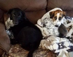 Love Train pups