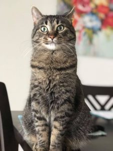"""Neko """"cheeks"""" finds a home with us!"""