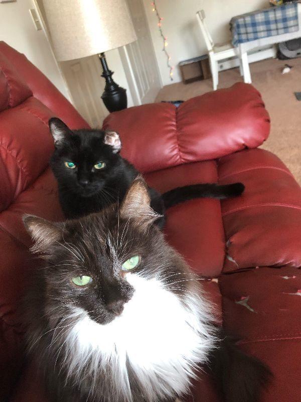 Senior siblings find new home
