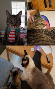 """A """"tail"""" of three cats – Story #3 - Toby"""